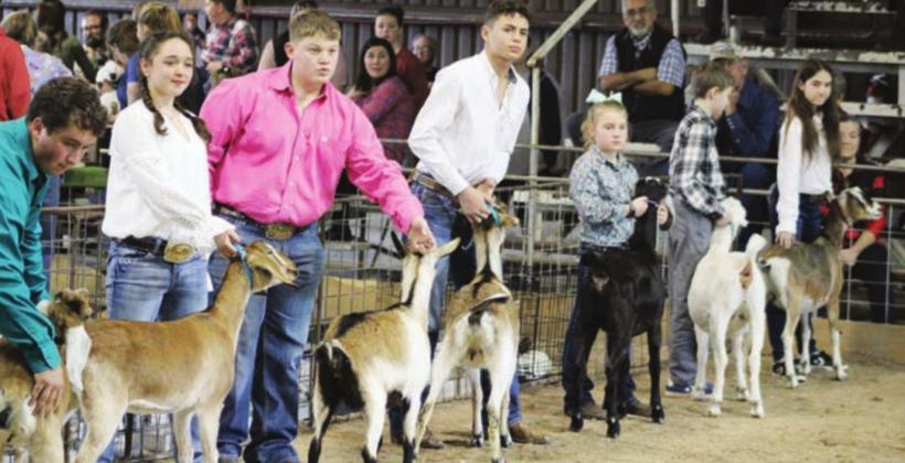The Burnet County livestock show is scheduled for Thursday, Friday and Saturday this week at the county fairgrounds. File photo